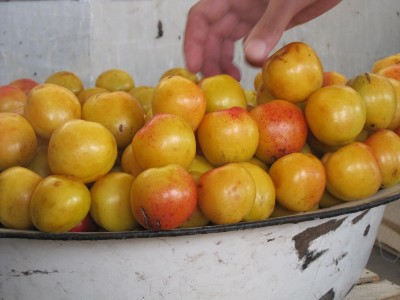 9 Ferghana fruit